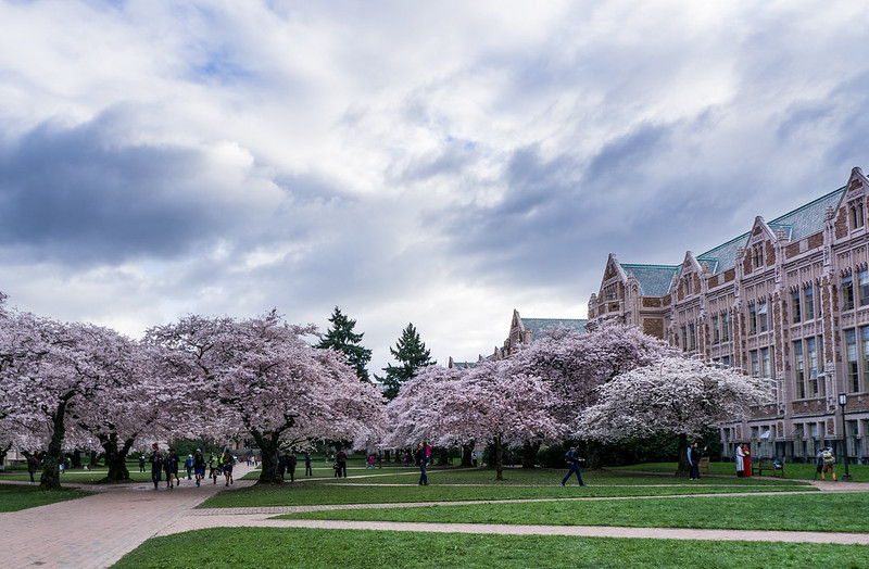 华盛顿大学 - University of Washington Cherry Blossoms - University of Washington